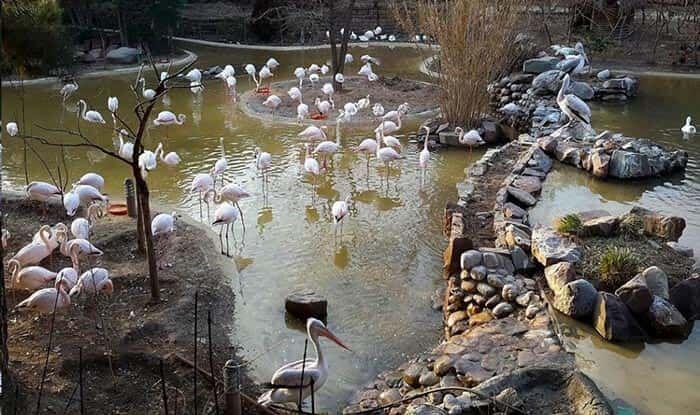خبرنگاران باغ پرندگان و سه بوستان جنگلی تهران همچنان تعطیل هستند