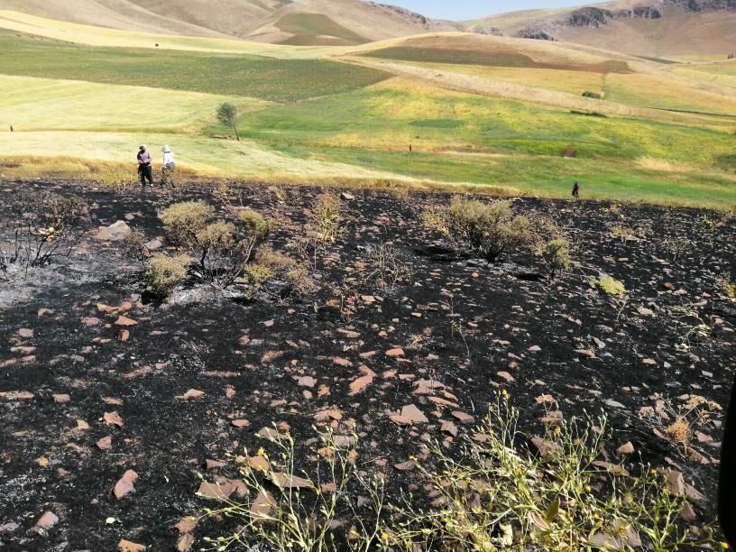خبرنگاران چهار هکتار باغ و گندمزار شیروان در آتش سوخت