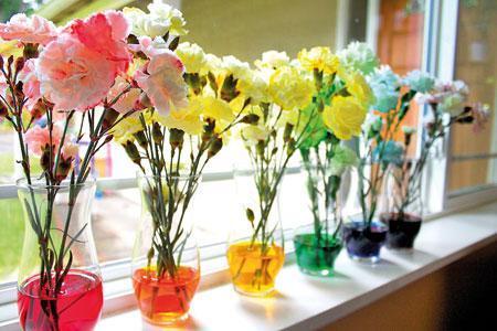 گل ها در کارگاه رنگرزی (