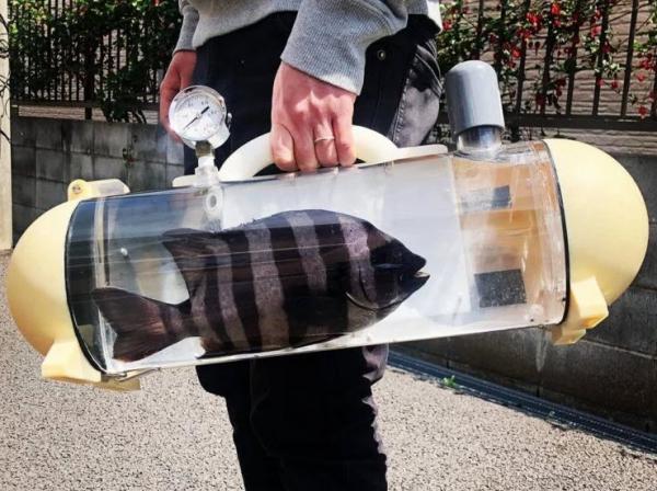 می خواهید ماهی خانگی خود را به گردش ببرید؟! ظرف مخصوصی برای این کار درست شده
