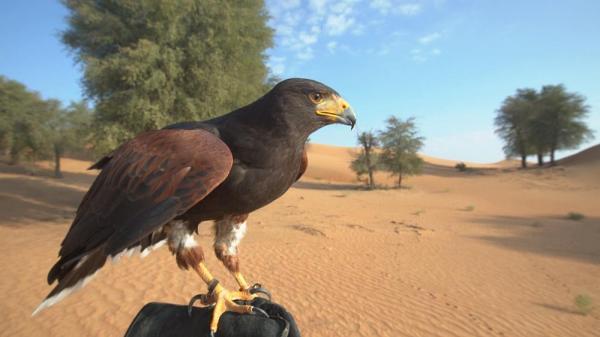 شناخت دبی؛ سفر به منطقه حفاظت شده صحرای دبی با خودروی شخصی