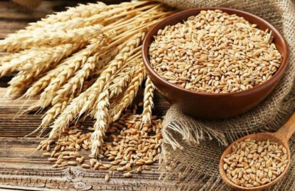 درخواست وزارت جهاد کشاورزی: تمامی سبوس استحصالی از گندم تا خاتمه سال جاری در سقف قیمت 1400 تومانی و با سامانه سبوس گندم عرضه گردد