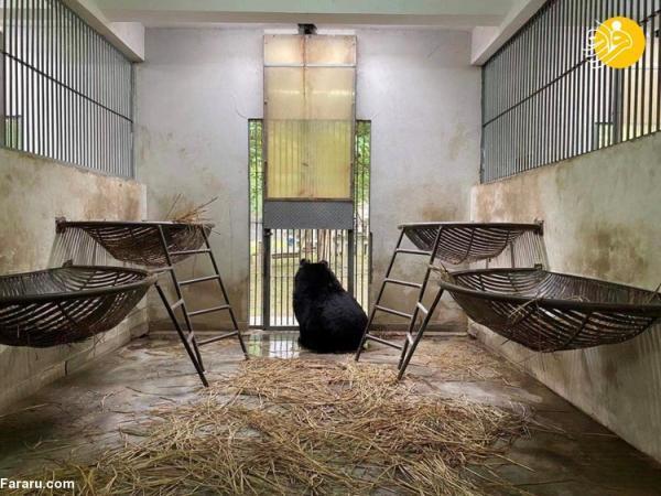 (ویدئو) نجات 101 خرس از شکنجه گاه